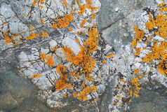 textura de la piedra áspera cubierta con los penachos del musgo Imágenes de archivo libres de regalías
