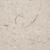 Textura de la piedra caliza Fotos de archivo libres de regalías