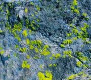 Textura de la piedra y del musgo Imagenes de archivo