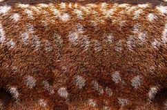 Textura de la piel Foto de archivo