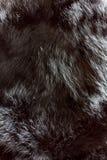 Textura de la piel Imagen de archivo libre de regalías