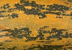 Textura de la piel de la calabaza amarilla Fondo agrícola Imagen de archivo