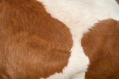 Textura de la piel de la vaca Fotografía de archivo