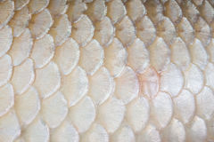 Textura de la piel de los pescados foto de archivo