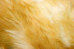 Textura de la piel de zorro rojo fotografía de archivo