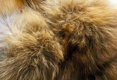 Textura de la piel de zorro rojo Foto de archivo libre de regalías