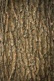 Textura de la piel del árbol de pino Foto de archivo