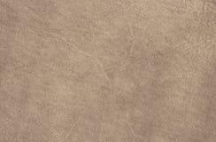 Textura de la piel del becerro foto de archivo libre de regalías
