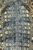 Textura de la piel del cocodrilo Foto de archivo