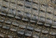 Textura de la piel del cocodrilo. Fotos de archivo libres de regalías