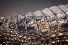 Textura de la piel del cocodrilo Fotos de archivo libres de regalías