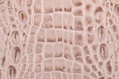 Textura de la piel del cocodrilo Fotos de archivo