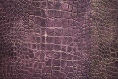 Textura de la piel del cocodrilo Imagen de archivo