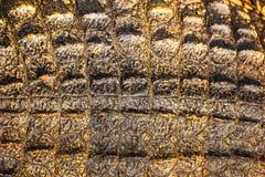 Textura de la piel del cocodrilo Fotografía de archivo libre de regalías