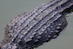 Textura de la piel del cocodrilo Tirado en granja del cocodrilo de Samut Prakan fotos de archivo libres de regalías