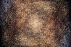 Textura de la piel del elefante Imágenes de archivo libres de regalías