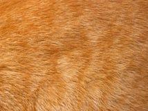 Textura de la piel del gato Fotografía de archivo