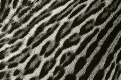 Textura de la piel del leopardo Foto de archivo libre de regalías