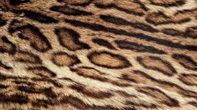 Textura de la piel del leopardo, piel real imagen de archivo