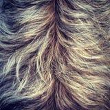 Textura de la piel del perro lanudo Imagen de archivo