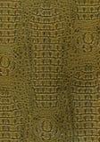 Textura de la piel del reptil Fotos de archivo libres de regalías