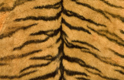 Textura de la piel del tigre Fotografía de archivo libre de regalías