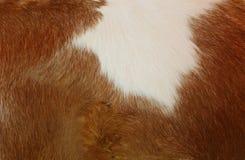 Textura de la piel y de las lanas de la vaca imágenes de archivo libres de regalías