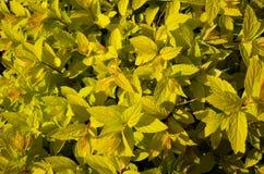 Textura de la planta amarilla imagen de archivo