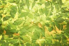 Textura de la planta en el papel viejo Imagen de archivo