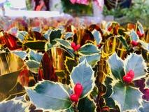 Textura de la planta típica de la Navidad fotografía de archivo