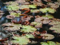 Textura de la planta y del agua imagenes de archivo