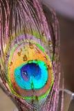 textura de la pluma fotografía de archivo libre de regalías