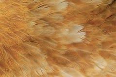 Textura de la pluma del pollo Fotografía de archivo