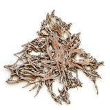 Textura de la raíz del árbol Foto de archivo