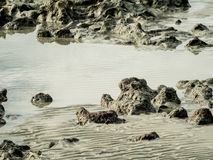 Textura de la roca en la playa del mar Imágenes de archivo libres de regalías