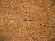 Textura de la sección del árbol de pino Fotos de archivo libres de regalías