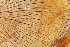 Textura de la sección representativa del árbol de pino Fotos de archivo