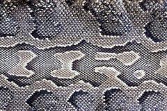 Textura de la serpiente Fotos de archivo libres de regalías