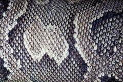 Textura de la serpiente Imágenes de archivo libres de regalías