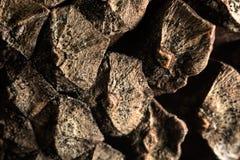 Textura de la superficie de conos Imagenes de archivo