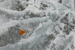 Textura de la superficie del hielo natural con la hoja de la caída Fotografía de archivo libre de regalías
