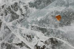 Textura de la superficie del hielo natural con la hoja de la caída Fotos de archivo libres de regalías