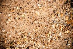 Textura de la tierra agrietada Foto de archivo libre de regalías