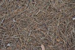 Textura de la tierra del bosque cubierta en agujas del pino imagen de archivo libre de regalías