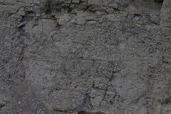 Textura de la tierra, hierba, madera de las ra?ces fotos de archivo