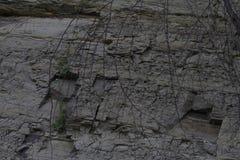 Textura de la tierra, hierba, madera de las ra?ces imagenes de archivo