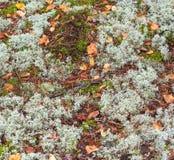 Textura de la tierra y del musgo imagen de archivo