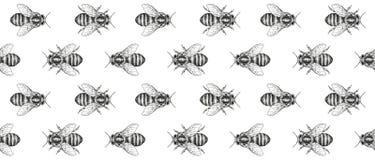 Textura de las abejas Modelo inconsútil Cinta decorativa Ejemplo gráfico realista Imagen de archivo