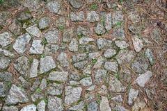 Textura de las agujas naturales de la piedra y del pino Foto de archivo libre de regalías