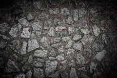 Textura de las agujas naturales de la piedra y del pino Fotografía de archivo libre de regalías